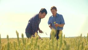 Old two farmers explore are studying. man Wheat Field summer in the field wheat bread. slow motion video. farmer Smart. Farming ecology concept. shake hands stock footage