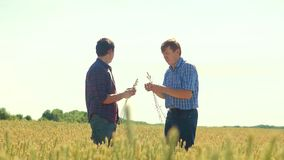 Old two farmers explore are studying. man Wheat Field summer in the field wheat bread. slow motion video Smart farming. Farmer ecology concept. agriculture stock video