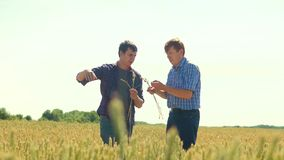 Old two farmers explore are studying. man Wheat Field summer in the field wheat bread. slow motion video Smart farming. Farmer ecology concept. agriculture stock footage