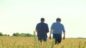 Old two farmers explore are studying. man Wheat Field summer in the field wheat bread. slow motion video Smart farming. Farmer ecology concept. agriculture stock video footage
