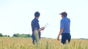 Old two farmers explore are studying. man Wheat Field summer in the field wheat bread. slow motion video Smart farming. Farmer ecology concept. lifestyle stock video