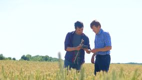 Old two farmers explore are studying. man Wheat Field summer in the field wheat bread. slow motion video Smart farming. Farmer lifestyle ecology concept stock footage