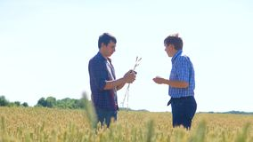 Old two farmers explore are studying. man Wheat Field summer in the field wheat bread. slow motion video Smart farming. Lifestyle. farmer ecology concept stock footage