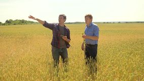 Old two farmers explore are studying to your smartphone. man Wheat Field summer in the field wheat bread. slow motion. Video. farmer Smart farming ecology stock video