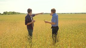 Old two farmers explore are studying to your smartphone. man Wheat Field summer in the field wheat bread. slow motion. Video. farmer Smart farming ecology stock video footage