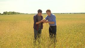 Old two farmers explore are studying to your smartphone. man Wheat Field summer in the field wheat bread. slow motion. Video. farmer Smart lifestyle farming stock video footage