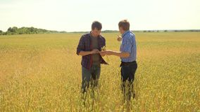 Old two farmers explore are studying to your smartphone. man Wheat Field summer in the field wheat bread. slow motion. Video. farmer Smart farming ecology stock footage