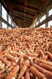 Barn for dry corn Stock Image