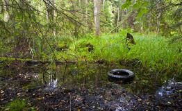 Old tyre in water. Among lush vegetation and trees Royalty Free Stock Photography