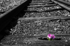 Old used railway tracks in duotone and small flower in colour ar Royalty Free Stock Photography
