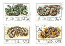 Old USSR mail stamps with snakes Stock Images