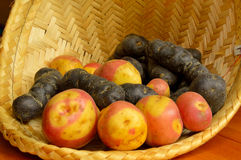 Old varities of potatoes Royalty Free Stock Images