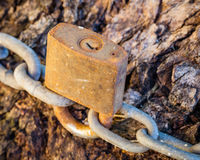 Old and Very Rusty Lock Securing Chain around Tree Trunk Stock Photo