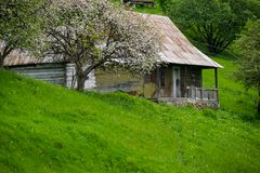 Free Old Village House And Blooming Tree Stock Images - 149814304