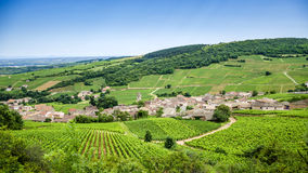 Old village with vineyards stock image
