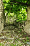 Old village stone paved passage under a vineyard Stock Image