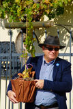 Old Vine Festival 2014 Stock Photos