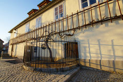 Old Vine on Lent in Maribor. Old vine in front of the Old Vine House on Lent in Maribor in spring: more than 400 years old vine is the oldest vine in the world Stock Photos
