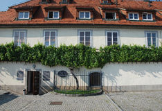 The Old Vine in Maribor. Maribor, Slovenia - August 6th 2015. The Old Vine, Stara Trta - at over 400 years old, this is the oldest living grape vine, and is one royalty free stock images