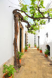 Old vine in the narrow street royalty free stock image
