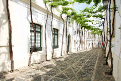 "Old vine in the narrow street. Of Spanish ""pueblo blanca Stock Photo"