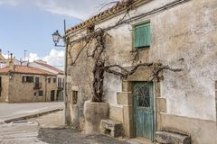 The old vine plant of the town of Piedrahita. Castilla la Mancha. Spain. The old vine plant in the center of the town of Piedrahita. Castilla la Mancha Community Stock Images