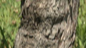 Old vine stock footage