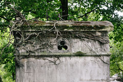 Old vines cover the top of a mausoleum in a european cemetery Royalty Free Stock Photography