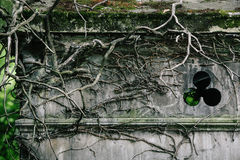 Old vines cover the top of a mausoleum in a european cemetery Stock Photos