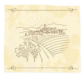 Old vineyard Royalty Free Stock Images