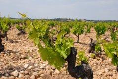 Old vineyard Stock Photography
