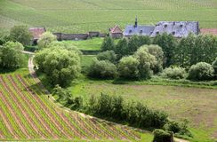 Old Vineyard. Near Palace Johannisberg in the Rheingau, Hesse, Germany Royalty Free Stock Photography