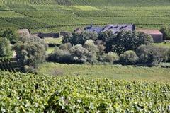 Old Vineyard. Near Palace Johannisberg in the Rheingau, Hesse, Germany Stock Photos