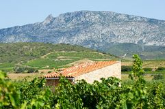 Old vineyard at Maury. Landscape with Queribus castle Royalty Free Stock Photography