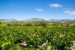 Old vineyard at Maury. Landscape with Queribus castle Royalty Free Stock Photo