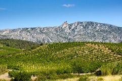 Old vineyard at Maury. Landscape with Queribus castle Royalty Free Stock Images