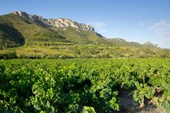 Old vineyard at South of France. Old vineyard at Maury, landscape Stock Photography
