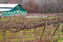 Old vineyard spring before season Royalty Free Stock Photos