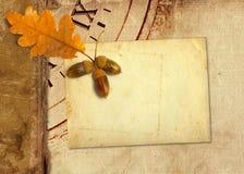Old vintage album with autumn oak leaves Stock Image