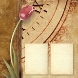 Old vintage album with  beautiful pink tulips Stock Image