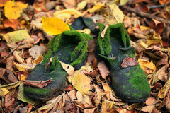 Old vintage boots in autmn leaves Stock Image