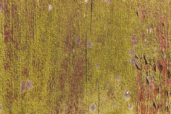 Old vintage brown plank texture. Plank with green moss background Royalty Free Stock Photography