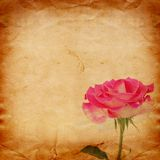 Old vintage card with a bouquet of beautiful pink roses Royalty Free Stock Image