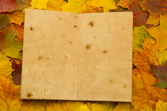 Old vintage empty open book on multi-colored maple leaves. Thanksgiving Royalty Free Stock Photography