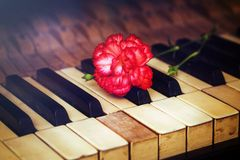 Old vintage gand piano keys with a red carnation flower, vintage picture. music concept. Royalty Free Stock Photography