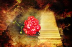 Old vintage grand piano keys with a red carnation flower, vintage picture.music concept. Stock Photography