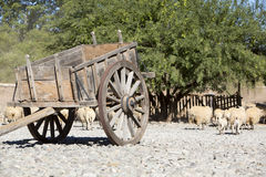 Old vintage horse carriage with goats, agriculture in Argentina. royalty free stock photography