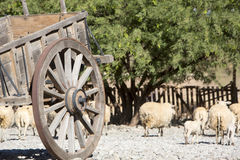 Old vintage horse carriage with goats, agriculture in Argentina. stock image