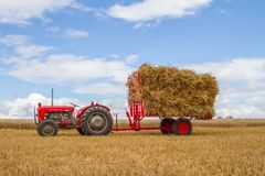 Old vintage Massey Ferguson and trailer in crop field Stock Photo