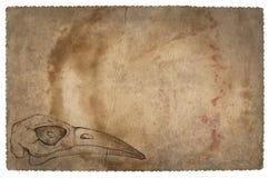 Old vintage paper with bird skull. Grunge background. Old vintage paper with hand drawn bird skull. Grunge background stock photo